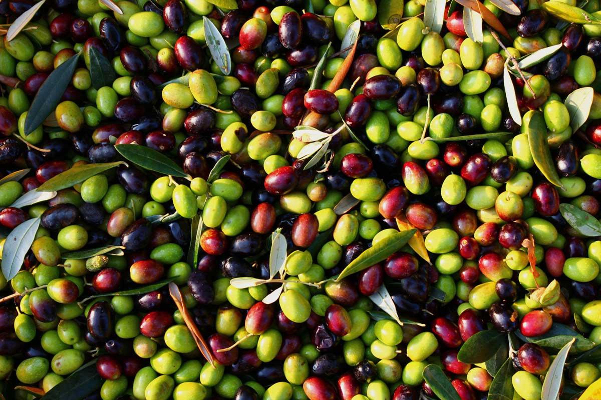 La vera natura dell'olio extra vergine di oliva